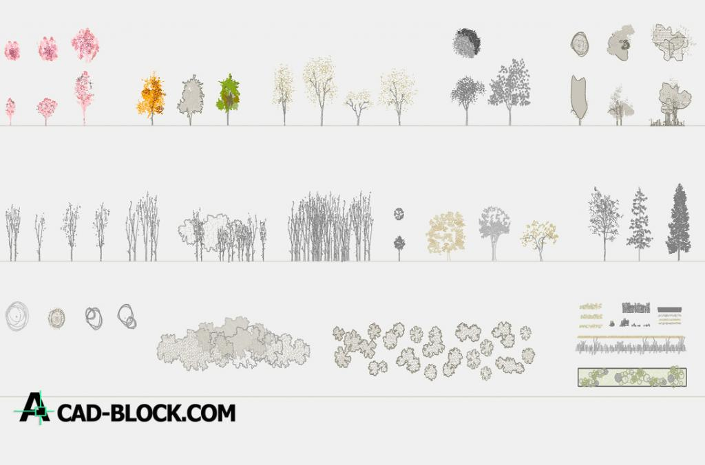 Trees elevation and plant 2D dwg autocad